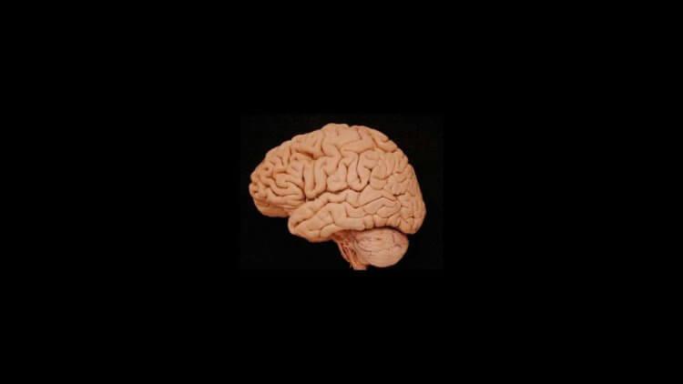 smaller_brain-750x422-1.jpg